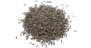 Caraway Harvest