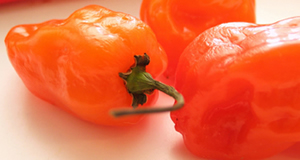 Choosing Chile Peppers