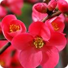 Bring Spring Indoors - Allrecipes