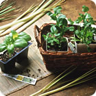 Kitchen Herb Gardening Article - Allrecipes.com