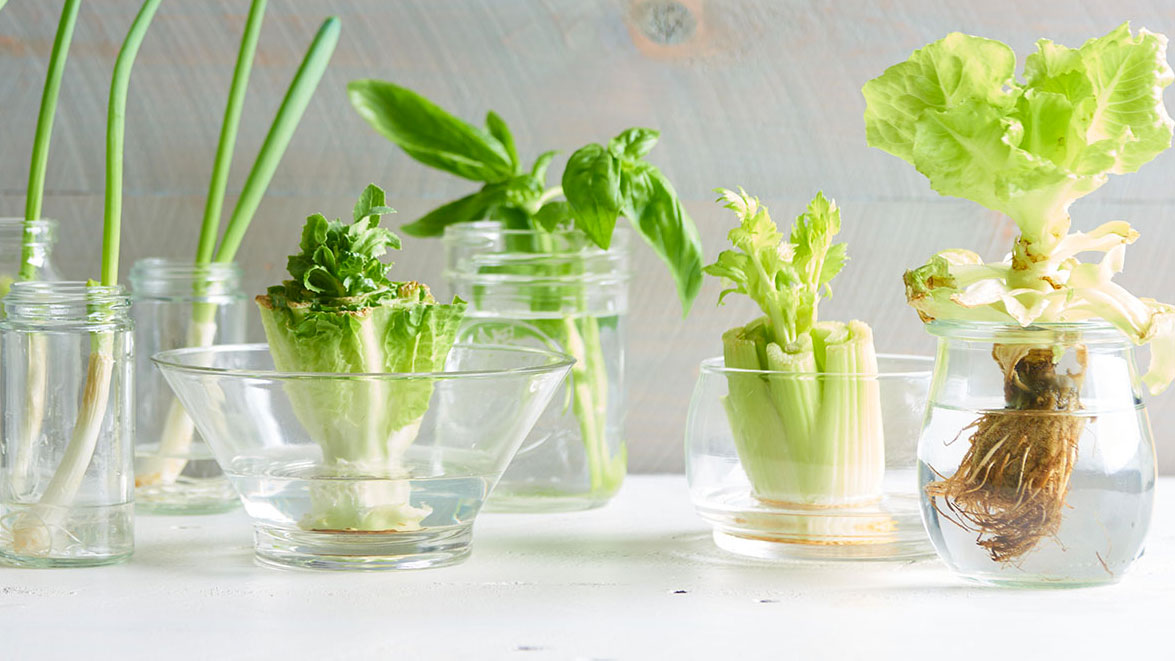 how to grow food from kitchen scraps