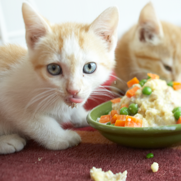 Is Organic Dog Food or Cat Food Better for My Pet?