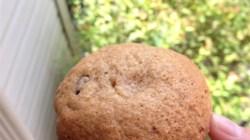 Addictive Pumpkin Muffins Recipe - Allrecipes.com