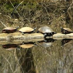 funny turtles