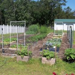 Most Of My Garden