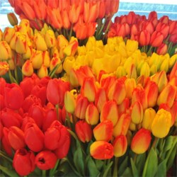 The freshest, most brilliantly colored flowers at  Pike Place Market