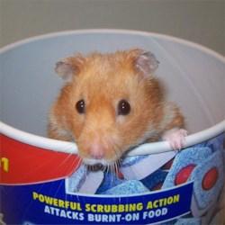 My Hamster Raymone