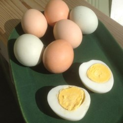 Pressure Cooker Hard-Boiled Eggs Recipe - These hard-cooked eggs are the way to go if you raise your own chickens or have access to very fresh eggs from a farmers' market. Using the pressure cooker makes even the freshest eggs easy to peel.