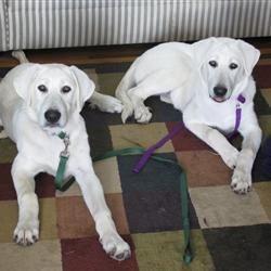 Georgia & Monty