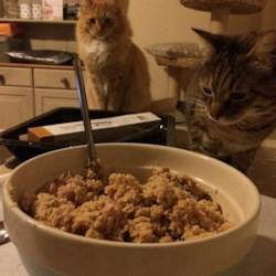 Kitty Tuna Dreams Recipe - Your feline friends will find these kitty treats purr-fect. Tuna is mixed with eggs, bread crumbs, and brewer's yeast and baked into tasty biscuits that are delicious and nutritious.