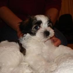 Pepper the Wonder Puppy