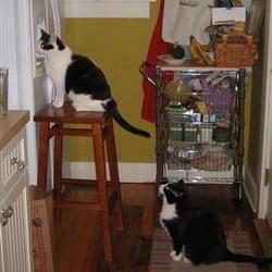 waiting for breakfast/dinner?