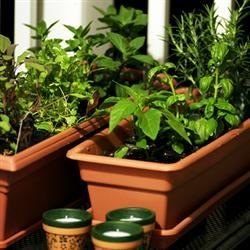 My herb garden, newly planted