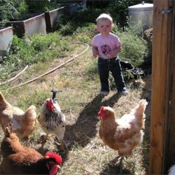 and of course, chickens and grandkids!