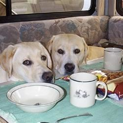 Where is my breakfast?