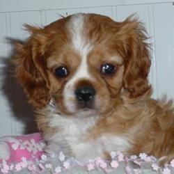 Sadie at 5 weeks.