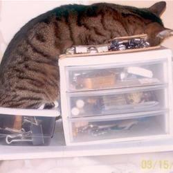 I can sleep anywhere.