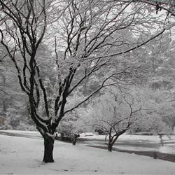 It's snowing in Atlanta! 2/12/10