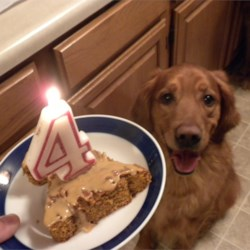 Doggie Birthday Cake Recipe - A carrot cake to celebrate your favorite pup, this easy cake combines shredded carrots with peanut butter, oil, vanilla, optional honey, and wheat or all-purpose flour.