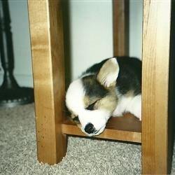 I can fall asleep anywhere.