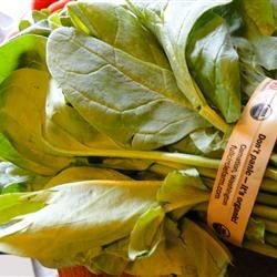 organic Washington spinach