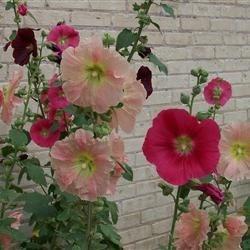 Flowers from Elk Rapids, MI