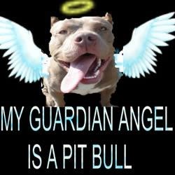 Guardian Angel Pit Bull