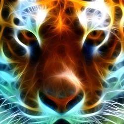 The Irish Tiger