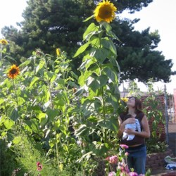 Me, my son, and the sunflower