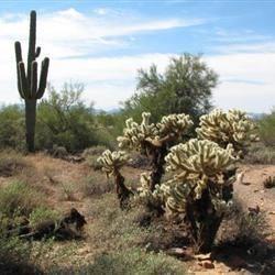 AZ scenery