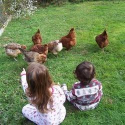 Chickken watching!