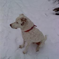 my dog spud
