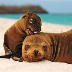 Sea Lion Pup & Mom