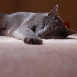 Sam's kitty Jake.