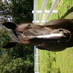 Midnight, my beautiful mare!!!