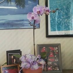 Bday Orchid from DH