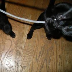 Kitten Attacks Camera Strap