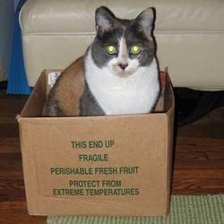 Perishable Fresh Cat
