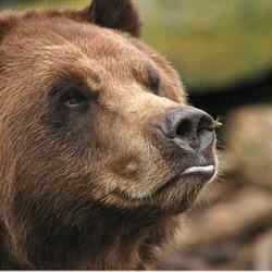 Bee 'n Bear