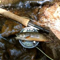 Jon caught this brook trout in Rapidan Creek