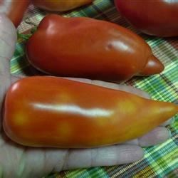 heirloom paste tomatoes