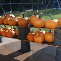 pumpkin yields