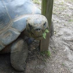 My Friend From the Colombia Zoo..The 200 Year-Old Tortoise