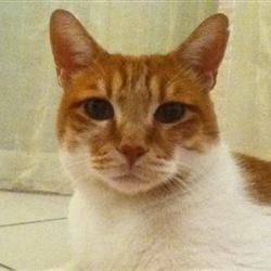 Apple cat