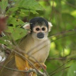 i love theses monkeys!