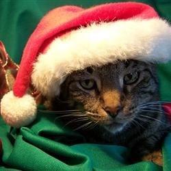 Santa Pippin