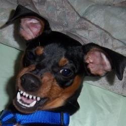 My crazy dog Boo Boo