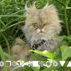frazzled kitty