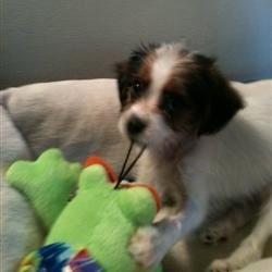 My new puppie, Charlie