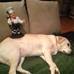 Luigi taming the dog